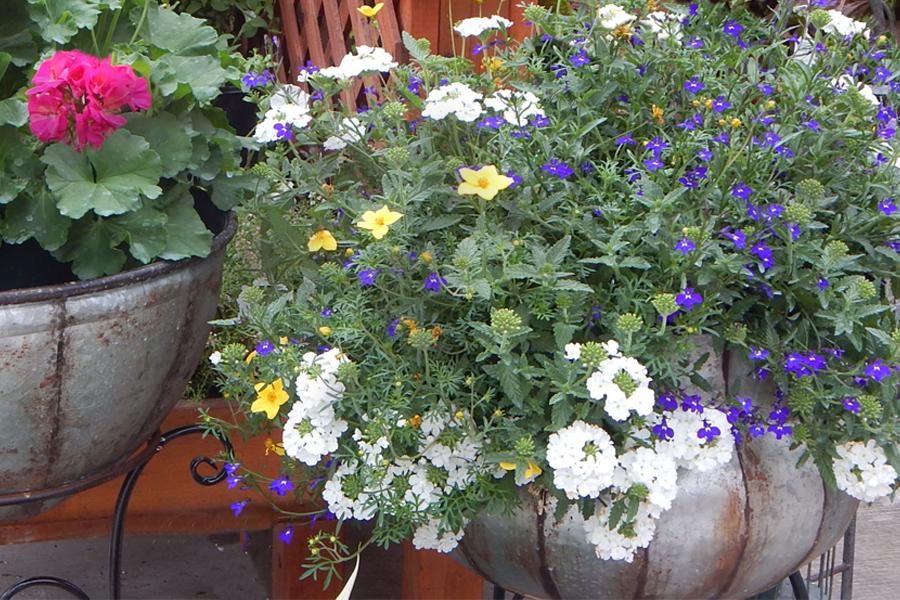 Hanging Baskets & Container Gardens - Johansen Farms Nursery & Garden Center