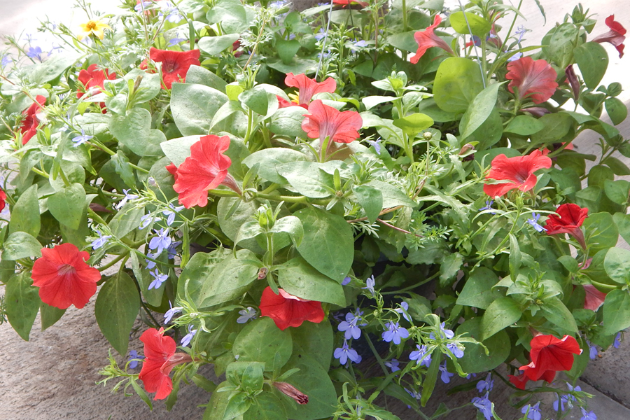 Hanging Baskets & Container Gardens - Johansen Farms Nursery & Garden Center