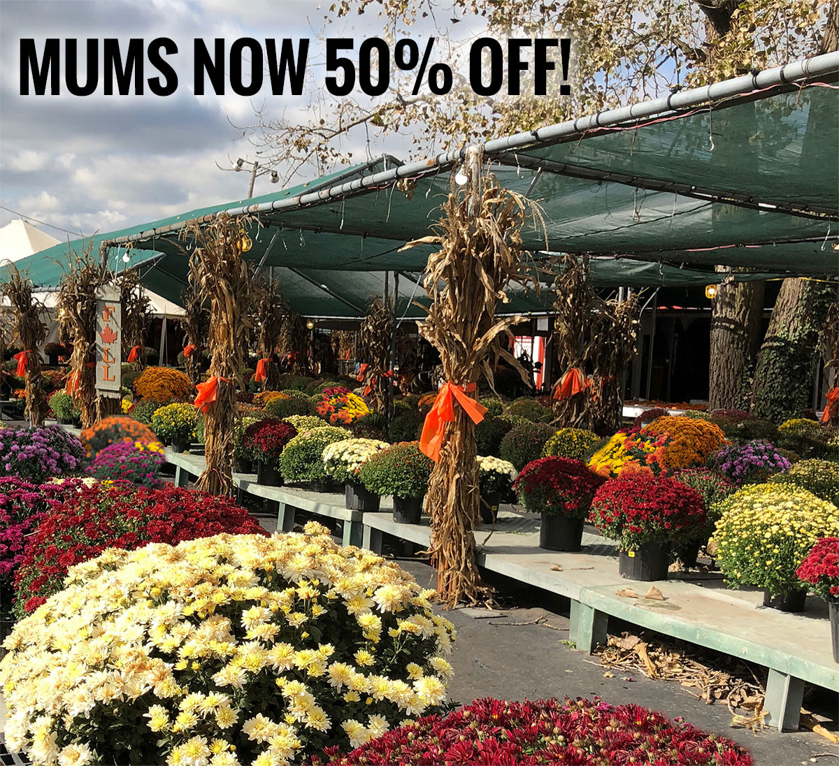 Johansen Farms Children's Zoo, Pumpkin Patch & Fall Festival - Our Mums are now 50% off!
